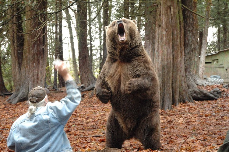 Image result for images of ferocious bear